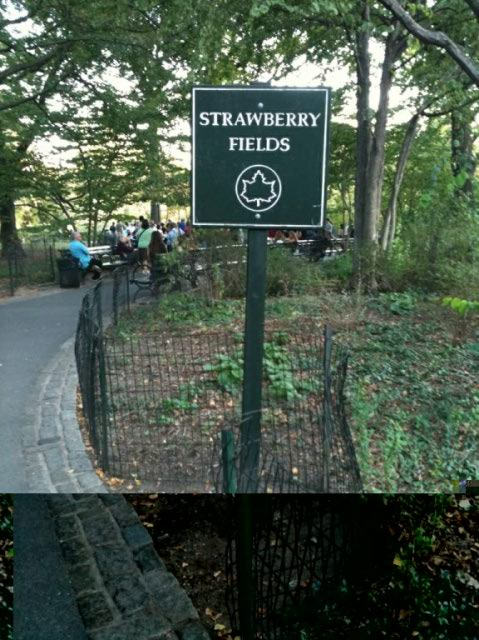 strawberry-fields2